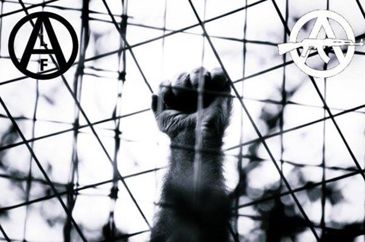 Dejemos de lado el veganismo y relancemos la lucha por la liberación animal