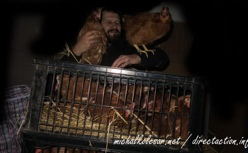 Rescate de 24 gallinas en la República Checa.