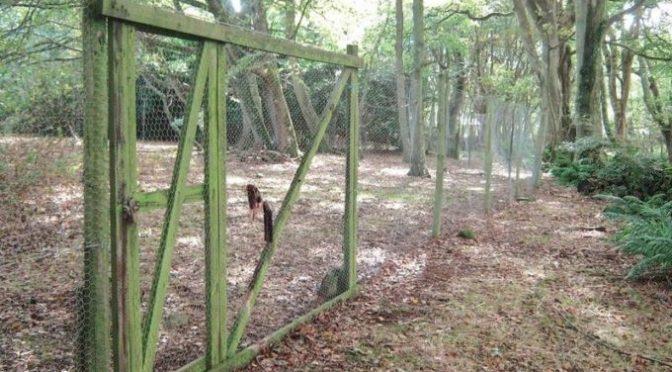 Cobertizos de faisanes demantelados en una finca de caza en Reino Unido